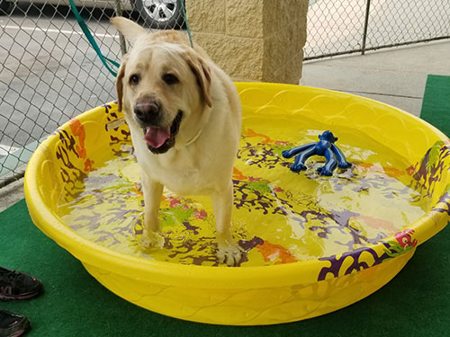dog in small pool