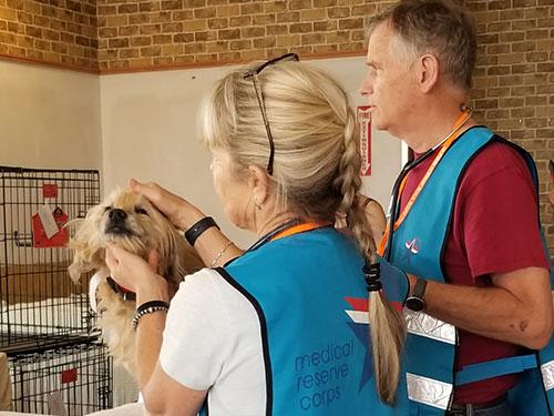 volunteers examining dog