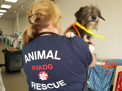 Rescue volunteer carrying dog