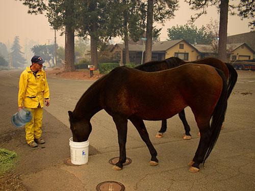Rescue volunteer feeding horse