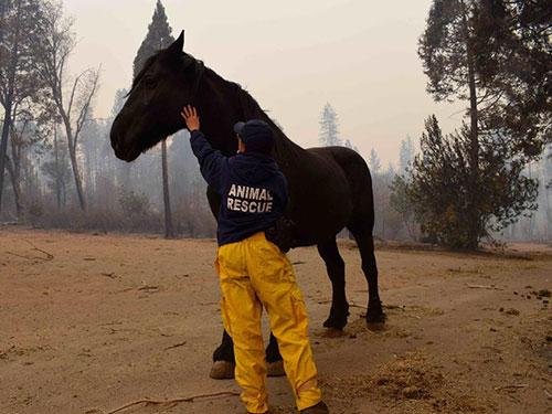 Volunteer calming rescued horse