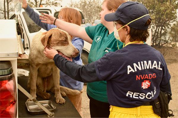 Volunteers helping rescue dogs