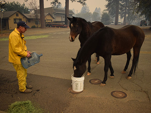 volunteer giving water to horses