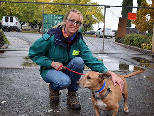 volunteer with a dog on a leash