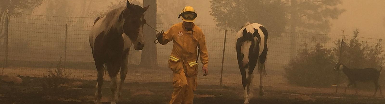 rescuer leading horses through smoky area