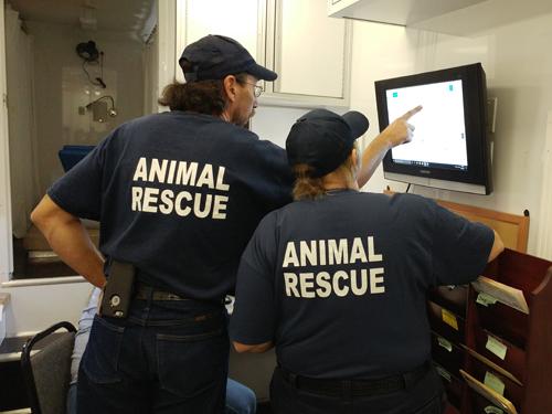 Volunteers looking at screen