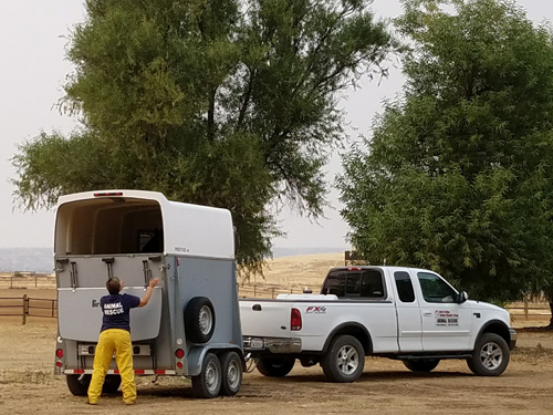 Volunteer preparing evacuation trailer