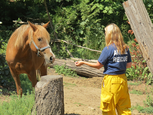 volunteer woman feeding horse