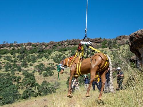 Horse mannequin rising