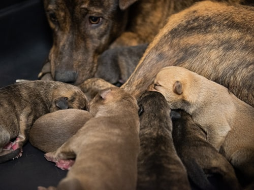 Mom dog and puppies