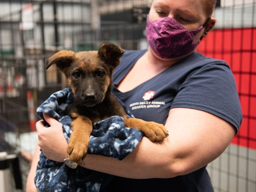 Puppy in volunteer's arms